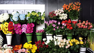 Local florist delivering daily to Picton, ON and surrounding areas.